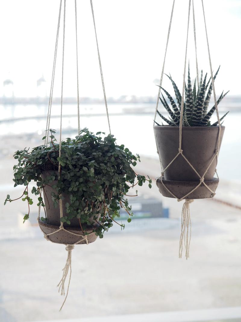 hængende potteplanter
